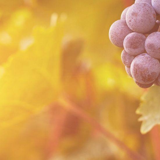 New Wine Winterconferentie 2021